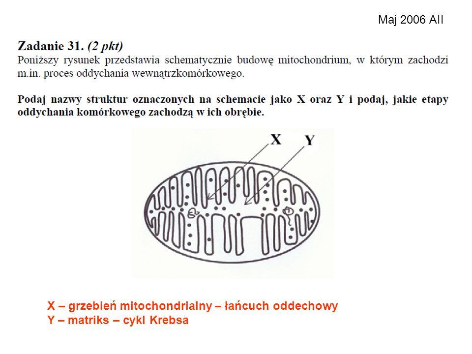Maj 2006 AII X – grzebień mitochondrialny – łańcuch oddechowy Y – matriks – cykl Krebsa