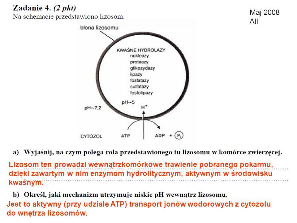 Maj 2008 AII Lizosom ten prowadzi wewnątrzkomórkowe trawienie pobranego pokarmu, dzięki zawartym w nim enzymom hydrolitycznym, aktywnym w środowisku.