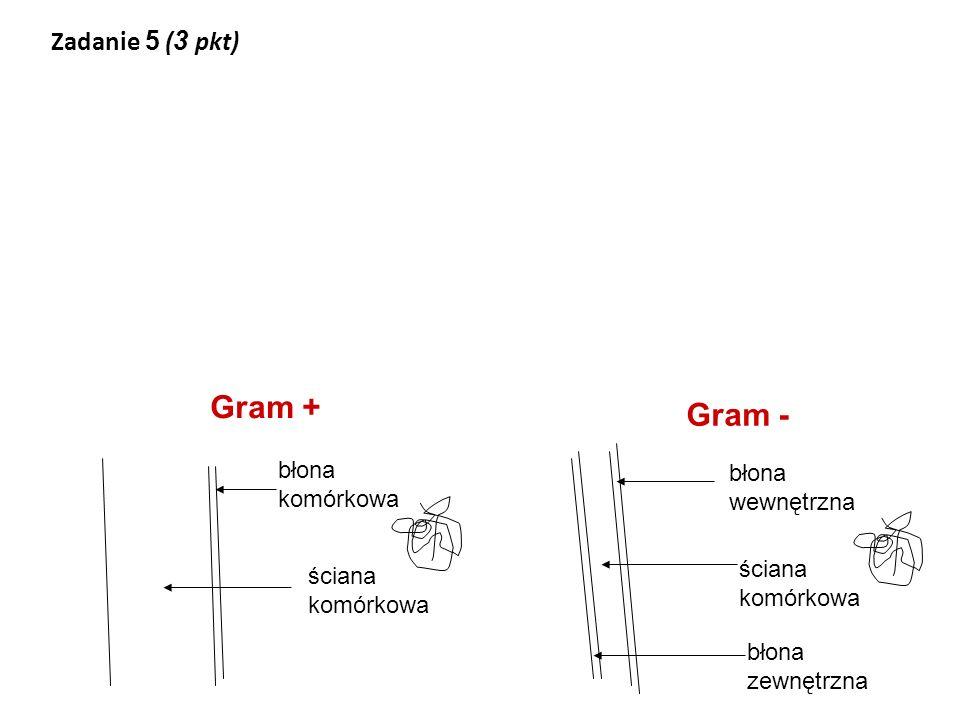 Gram + Gram - Zadanie 5 (3 pkt) błona komórkowa błona wewnętrzna