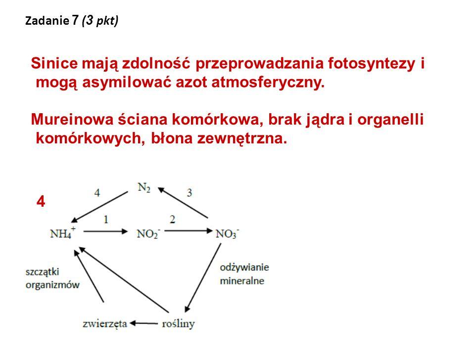 Zadanie 7 (3 pkt) Sinice mają zdolność przeprowadzania fotosyntezy i mogą asymilować azot atmosferyczny.