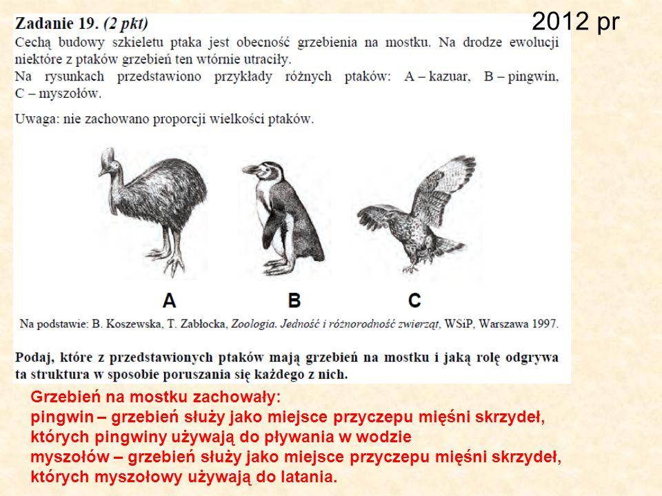 2012 pr Grzebień na mostku zachowały: