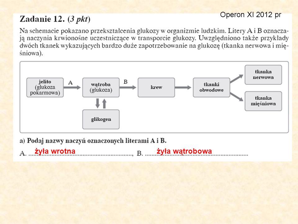 Operon XI 2012 pr żyła wrotna żyła wątrobowa