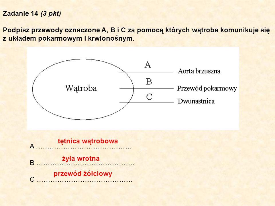 Zadanie 14 (3 pkt) Podpisz przewody oznaczone A, B i C za pomocą których wątroba komunikuje się. z układem pokarmowym i krwionośnym.