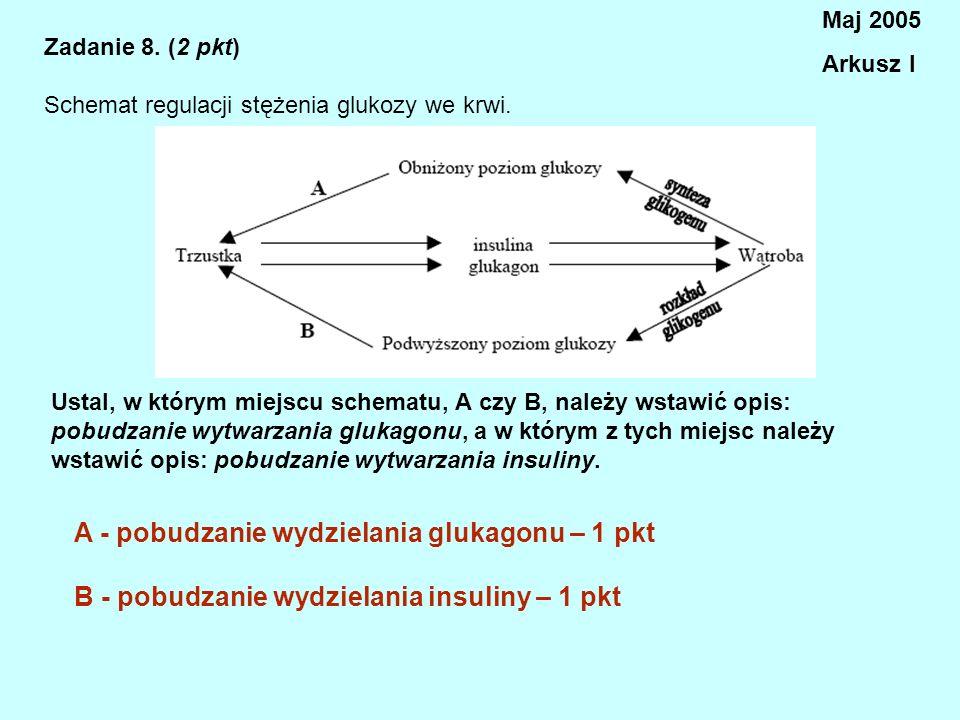 A - pobudzanie wydzielania glukagonu – 1 pkt