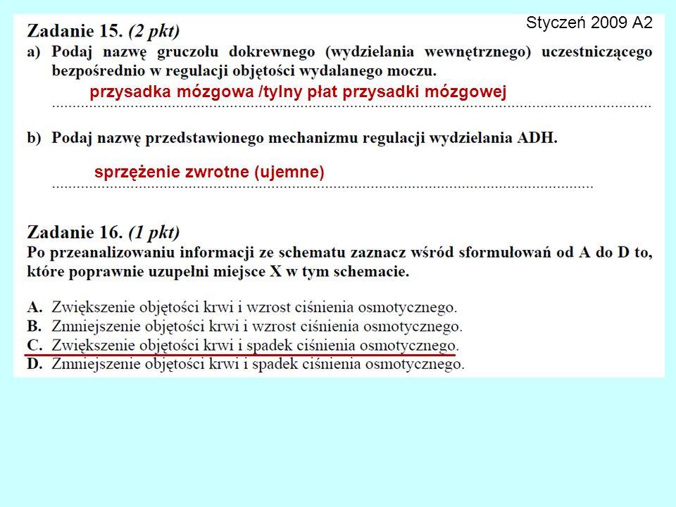 Styczeń 2009 A2 przysadka mózgowa /tylny płat przysadki mózgowej sprzężenie zwrotne (ujemne)