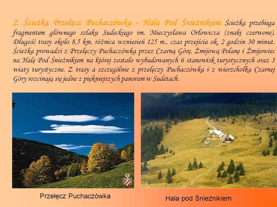 2. Ścieżka Przełęcz Puchaczówka - Hala Pod Śnieżnikiem Ścieżka przebiega fragmentem głównego szlaku Sudeckiego im. Mieczysława Orłowicza (znaki czerwone). Długość trasy około 8,5 km, różnica wzniesień 125 m., czas przejścia ok. 2 godzin 30 minut. Ścieżka prowadzi z Przełęczy Puchaczówka przez Czarną Górę, Żmijową Polanę i Żmijowiec na Halę Pod Śnieżnikiem na której zostało wybudowanych 6 stanowisk turystycznych oraz 3 wiaty turystyczne. Z trasy a szczególnie z przełęczy Puchaczówka i z wierzchołka Czarnej Góry rozcinają się jedne z piękniejszych panoram w Sudetach.