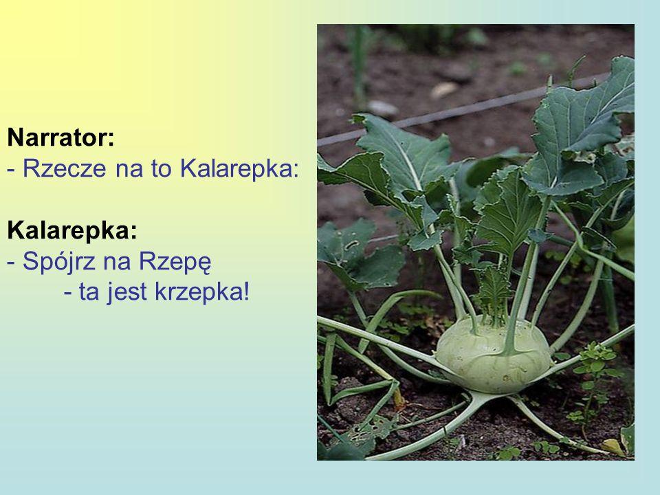 Narrator: Rzecze na to Kalarepka: Kalarepka: Spójrz na Rzepę - ta jest krzepka!