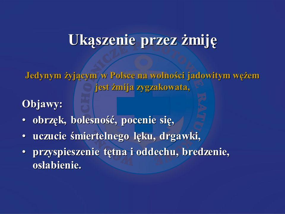 Ukąszenie przez żmiję Jedynym żyjącym w Polsce na wolności jadowitym wężem jest żmija zygzakowata,