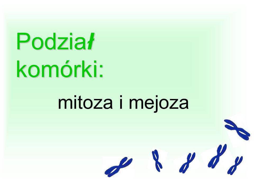 Podział komórki: