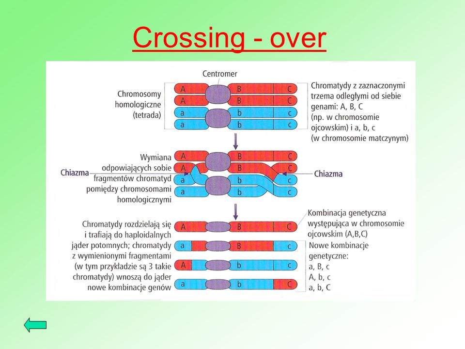 Crossing - over