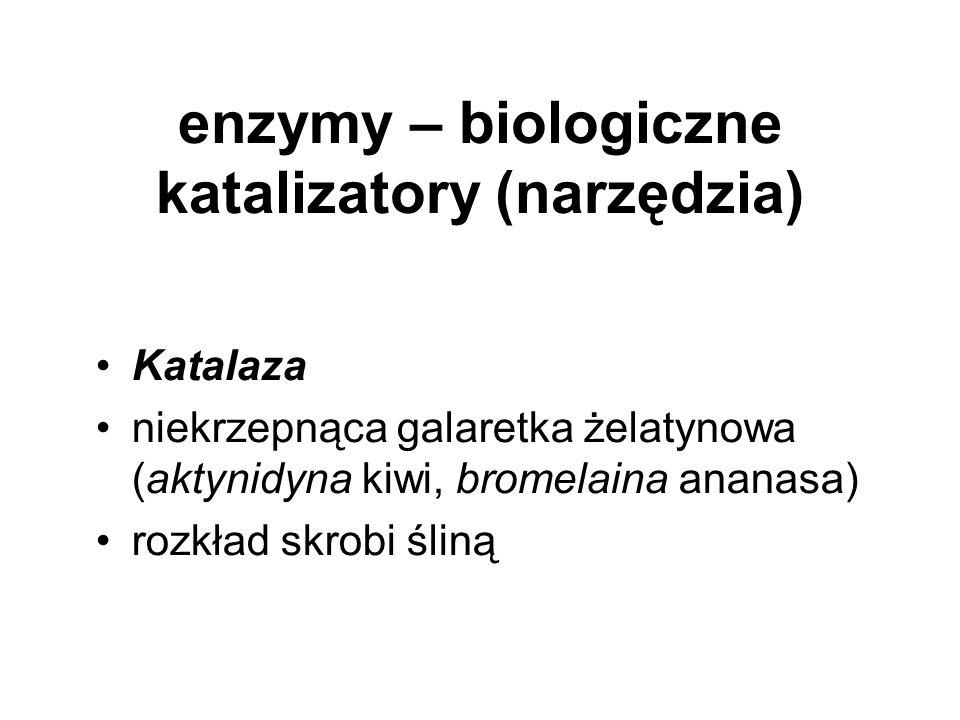 enzymy – biologiczne katalizatory (narzędzia)