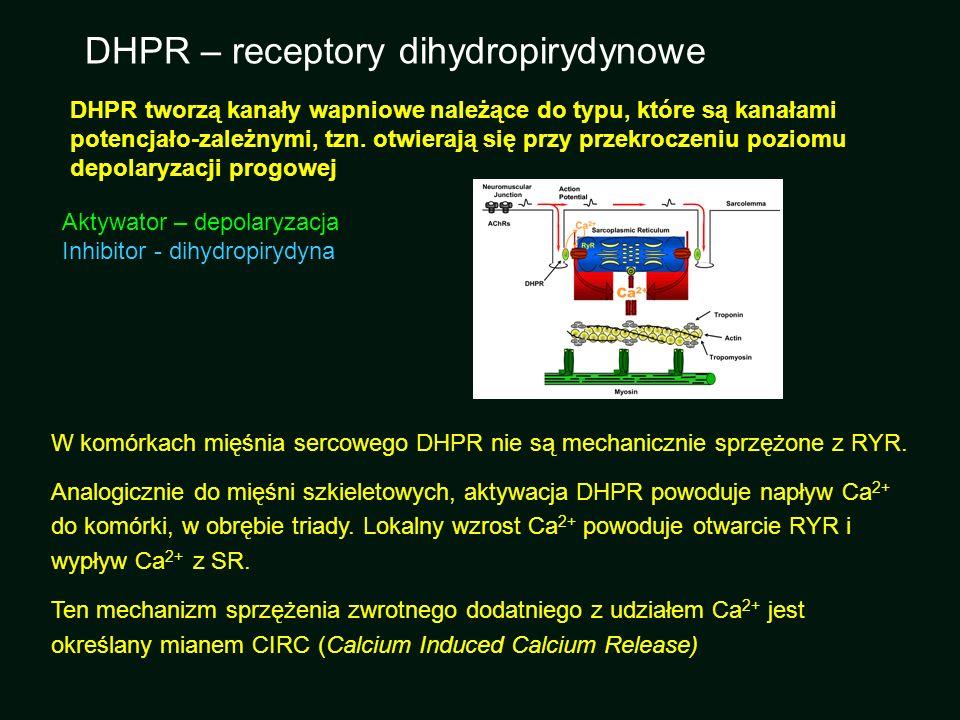 DHPR – receptory dihydropirydynowe