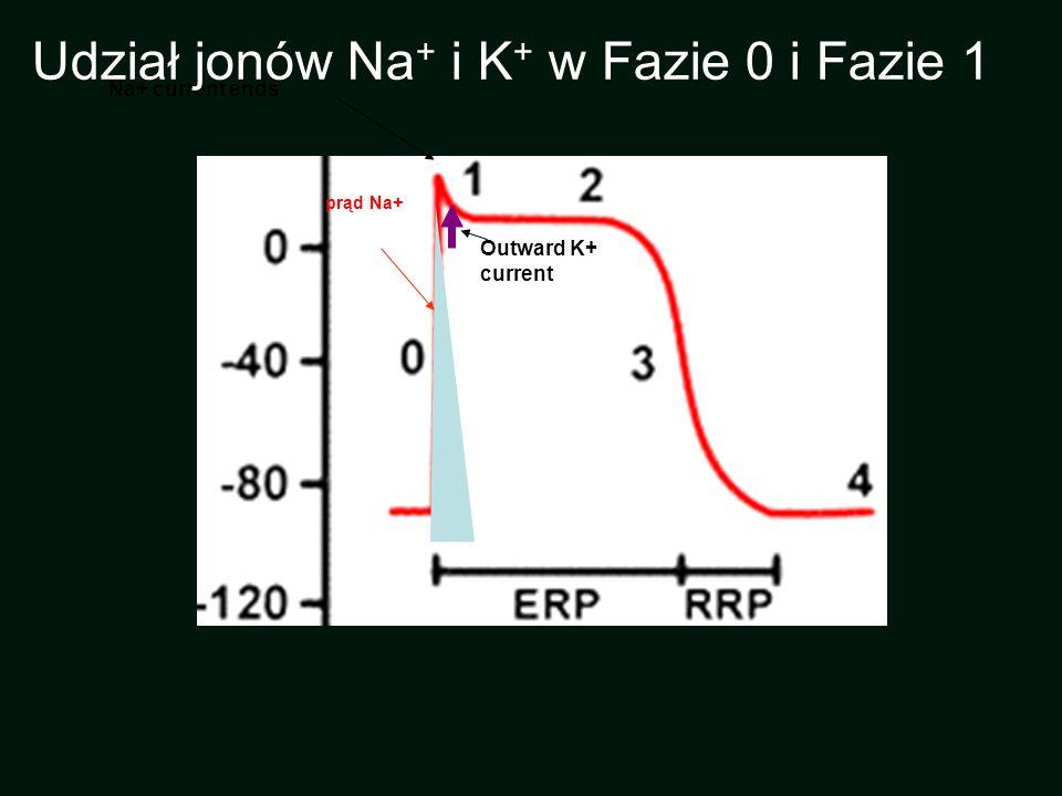 Udział jonów Na+ i K+ w Fazie 0 i Fazie 1