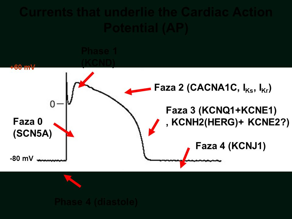 Currents that underlie the Cardiac Action Potential (AP)