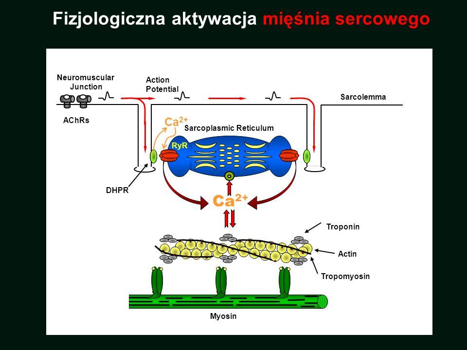 Fizjologiczna aktywacja mięśnia sercowego