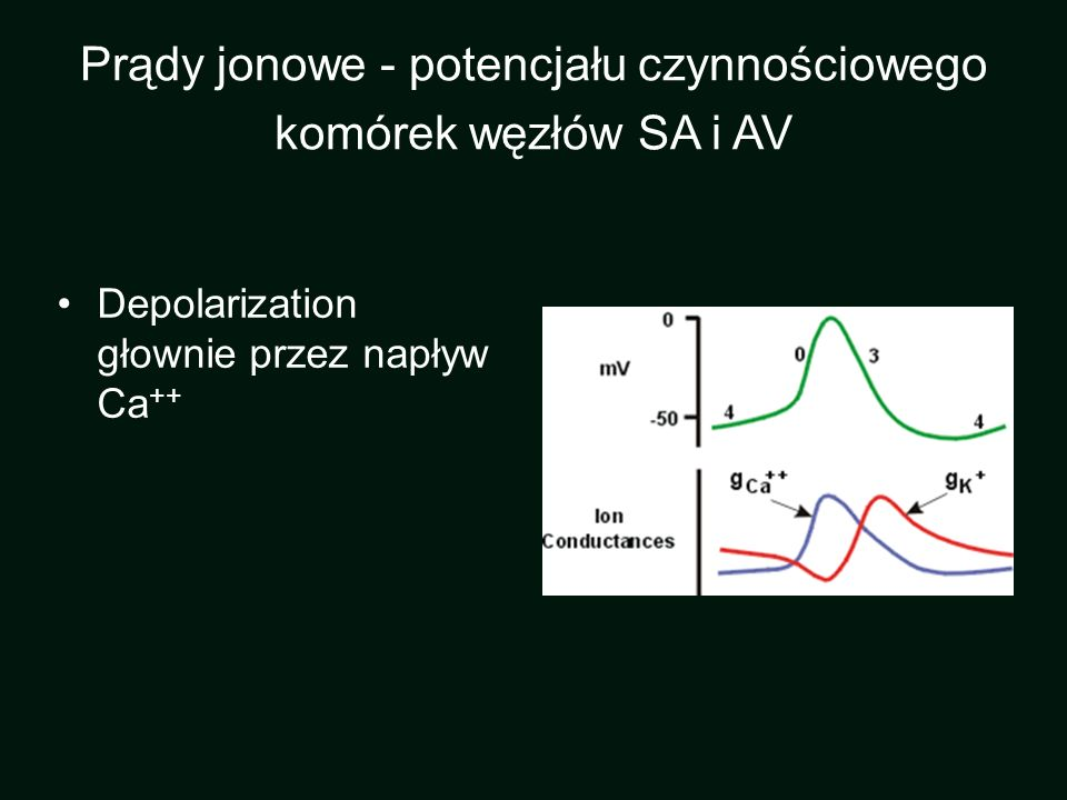 Prądy jonowe - potencjału czynnościowego komórek węzłów SA i AV
