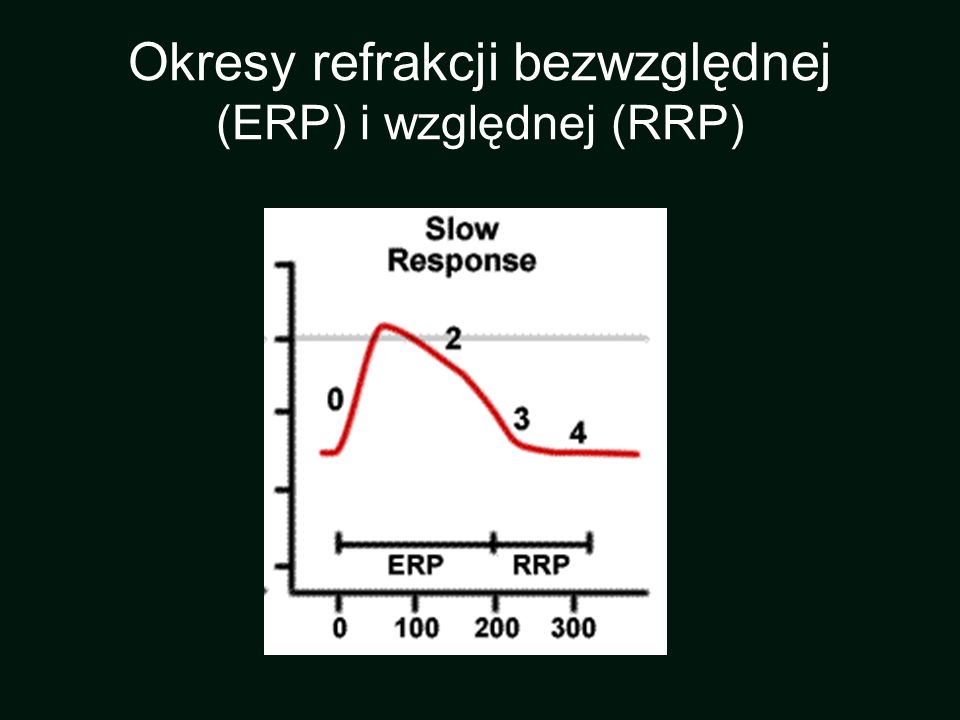 Okresy refrakcji bezwzględnej (ERP) i względnej (RRP)