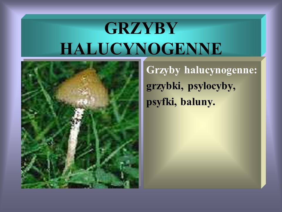 GRZYBY HALUCYNOGENNE Grzyby halucynogenne: grzybki, psylocyby,
