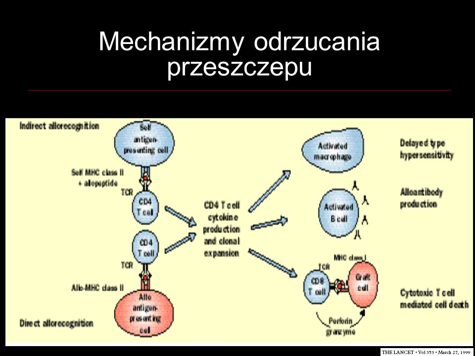 Mechanizmy odrzucania przeszczepu
