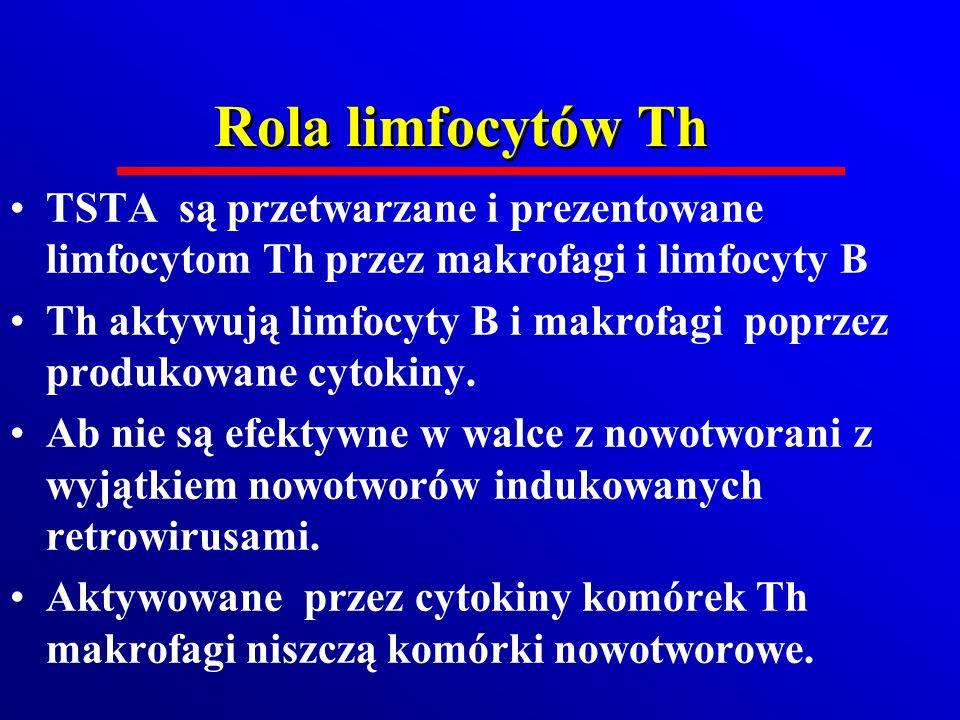 Rola limfocytów Th TSTA są przetwarzane i prezentowane limfocytom Th przez makrofagi i limfocyty B.