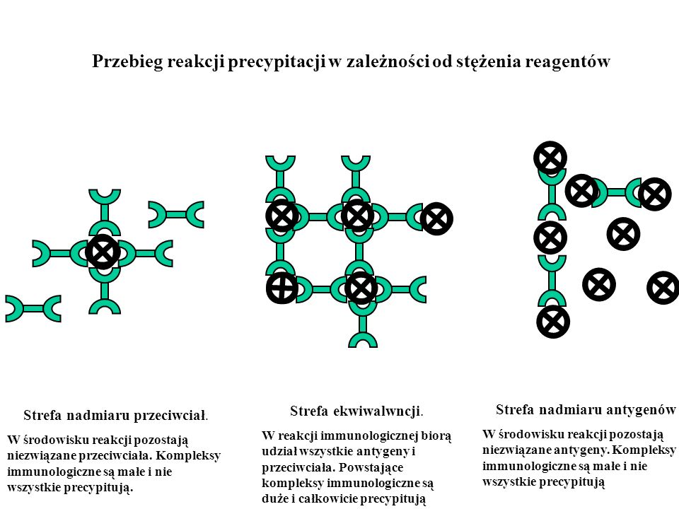 Przebieg reakcji precypitacji w zależności od stężenia reagentów