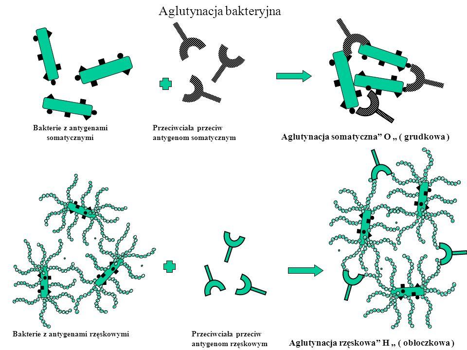 Bakterie z antygenami somatycznymi