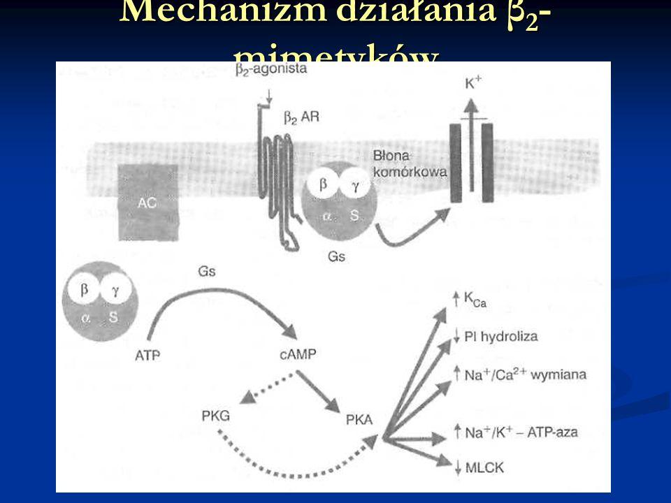 Mechanizm działania β2-mimetyków