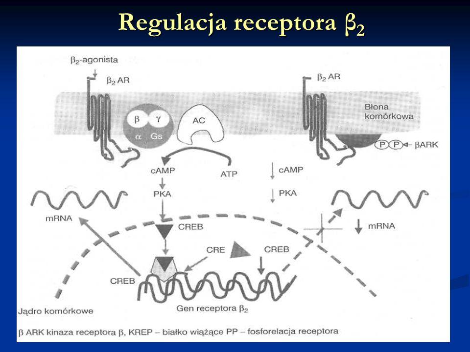 Regulacja receptora β2