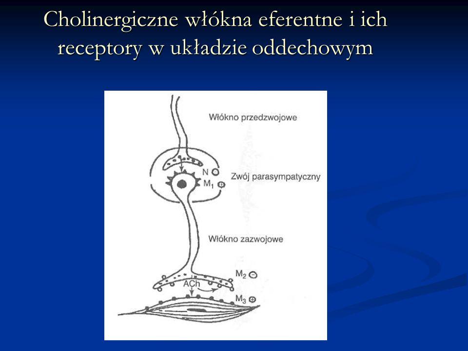 Cholinergiczne włókna eferentne i ich receptory w układzie oddechowym