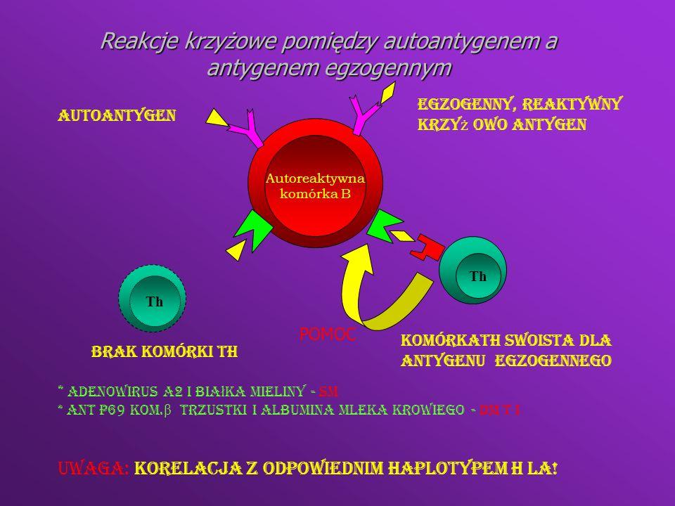 Reakcje krzyżowe pomiędzy autoantygenem a antygenem egzogennym