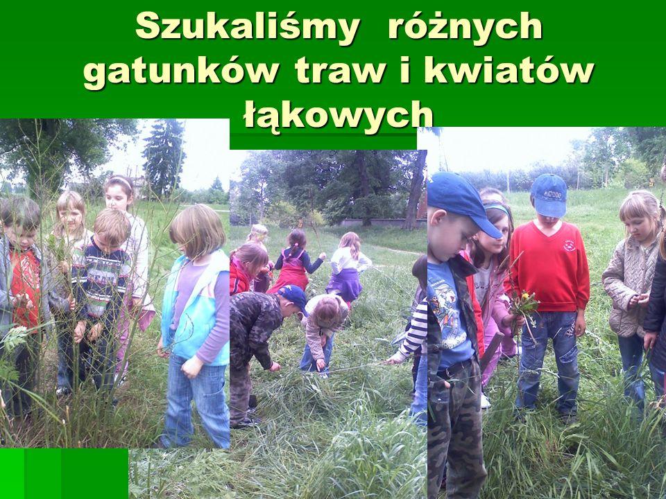 Szukaliśmy różnych gatunków traw i kwiatów łąkowych