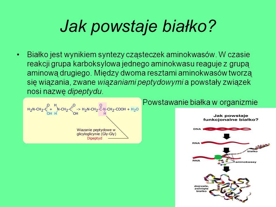 Powstawanie białka w organizmie
