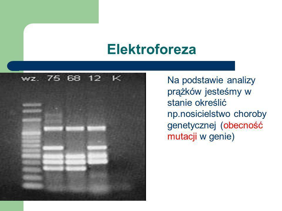 Elektroforeza Na podstawie analizy prążków jesteśmy w stanie określić np.nosicielstwo choroby genetycznej (obecność mutacji w genie)