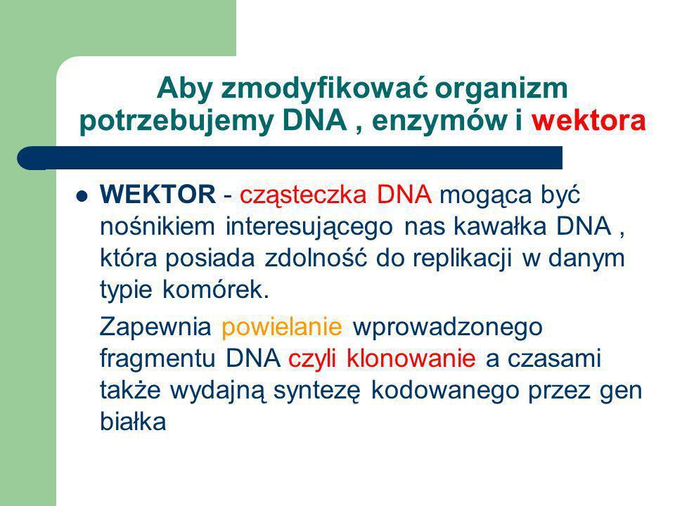 Aby zmodyfikować organizm potrzebujemy DNA , enzymów i wektora