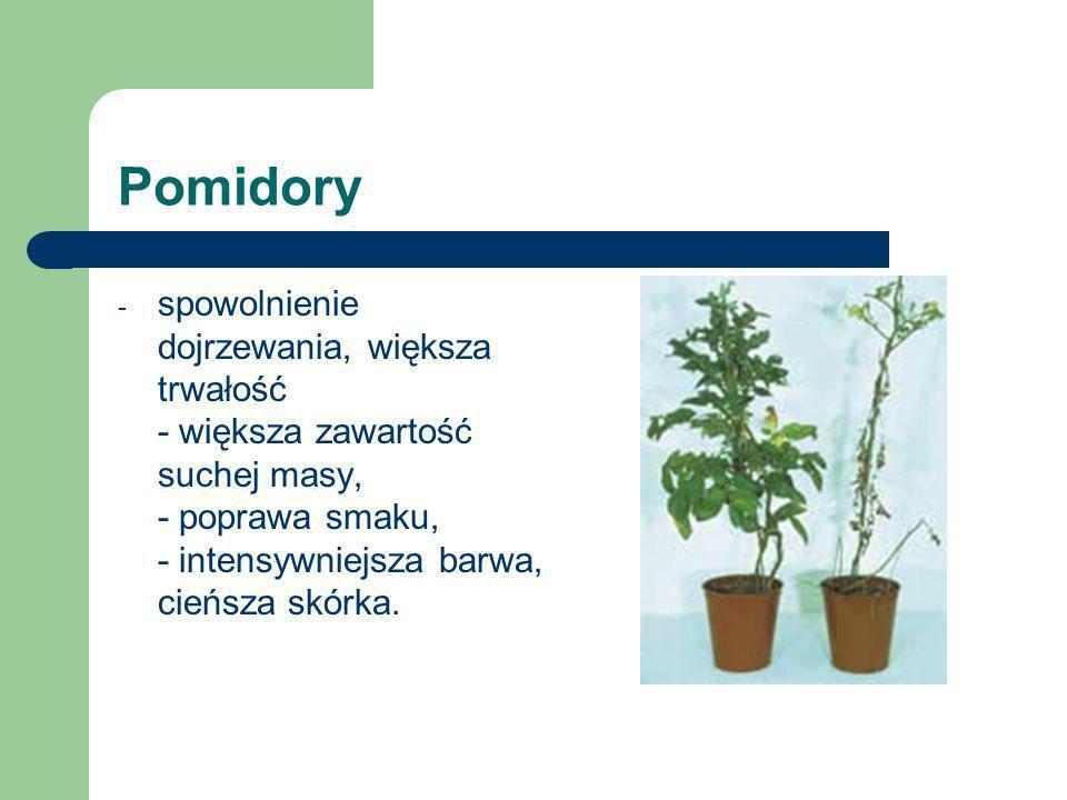 Pomidoryspowolnienie dojrzewania, większa trwałość - większa zawartość suchej masy, - poprawa smaku, - intensywniejsza barwa, cieńsza skórka.