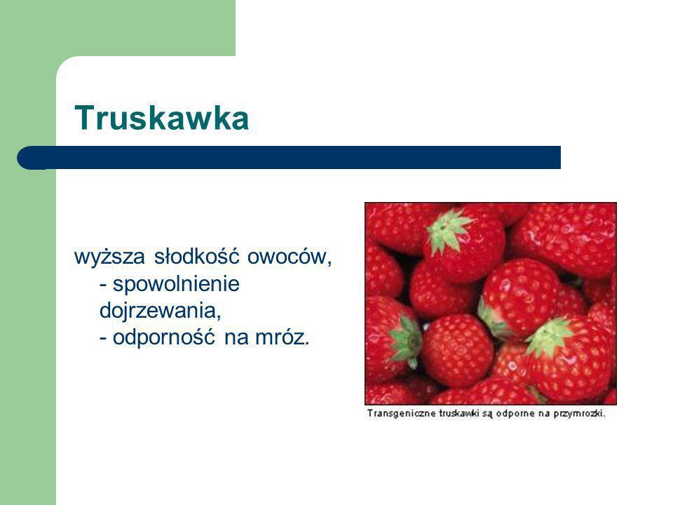 Truskawka wyższa słodkość owoców, - spowolnienie dojrzewania, - odporność na mróz.