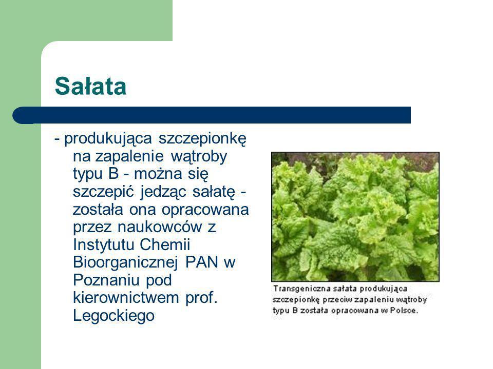 Sałata