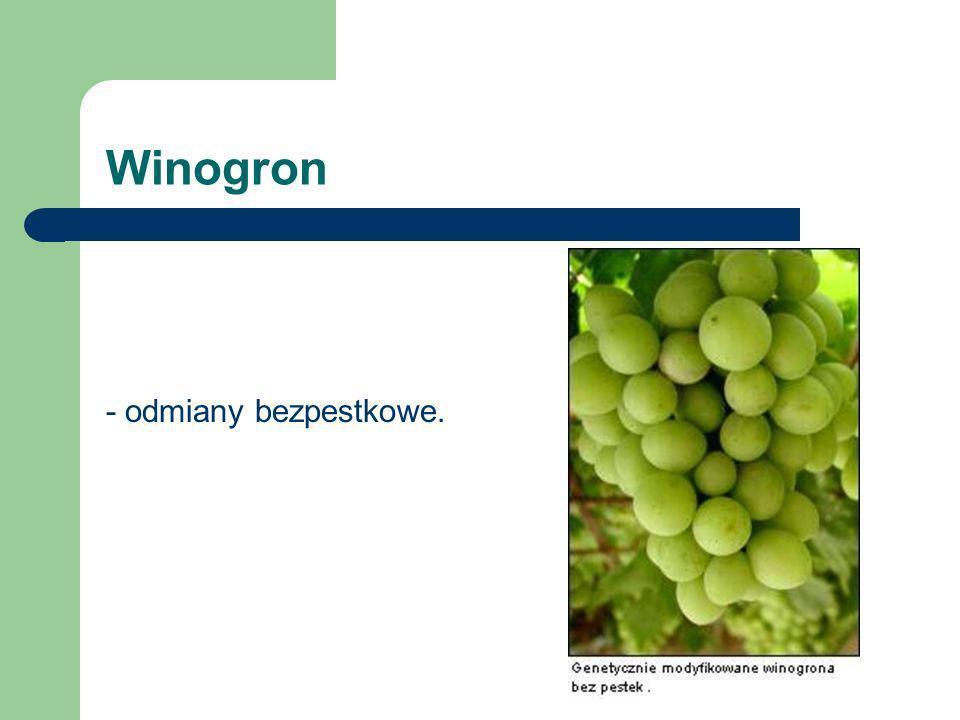Winogron - odmiany bezpestkowe.