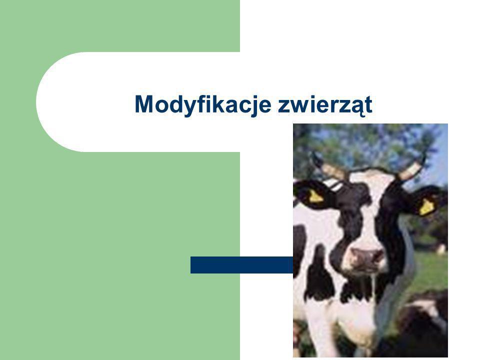 Modyfikacje zwierząt