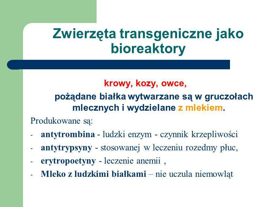Zwierzęta transgeniczne jako bioreaktory