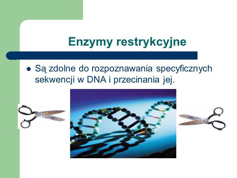 Enzymy restrykcyjne Są zdolne do rozpoznawania specyficznych sekwencji w DNA i przecinania jej.