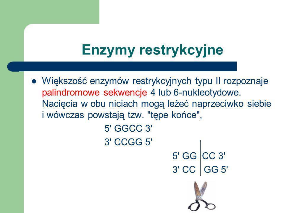Enzymy restrykcyjne
