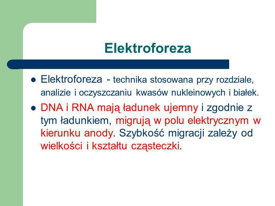 ElektroforezaElektroforeza - technika stosowana przy rozdziale, analizie i oczyszczaniu kwasów nukleinowych i białek.