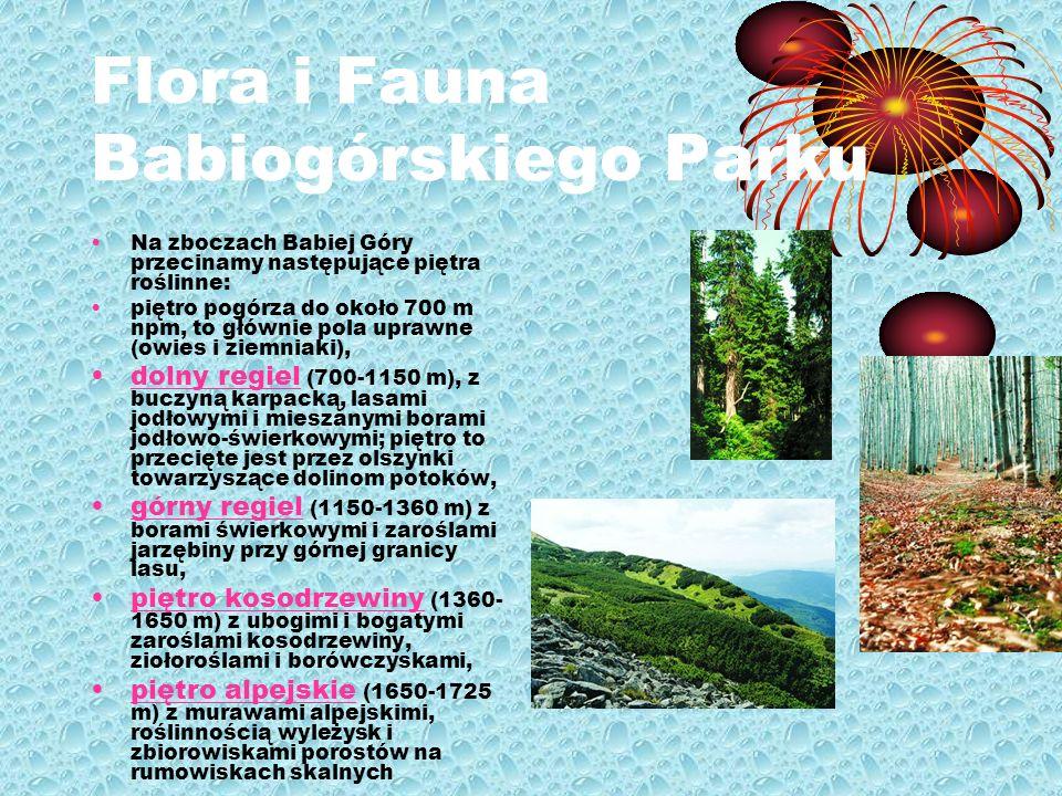 Flora i Fauna Babiogórskiego Parku