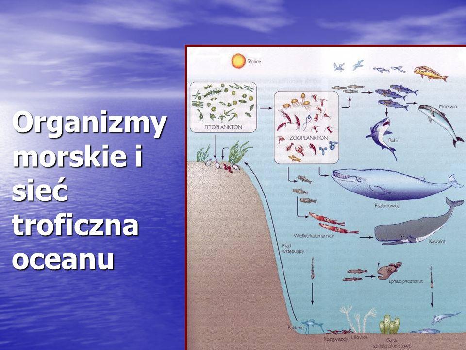 Organizmy morskie i sieć troficzna oceanu
