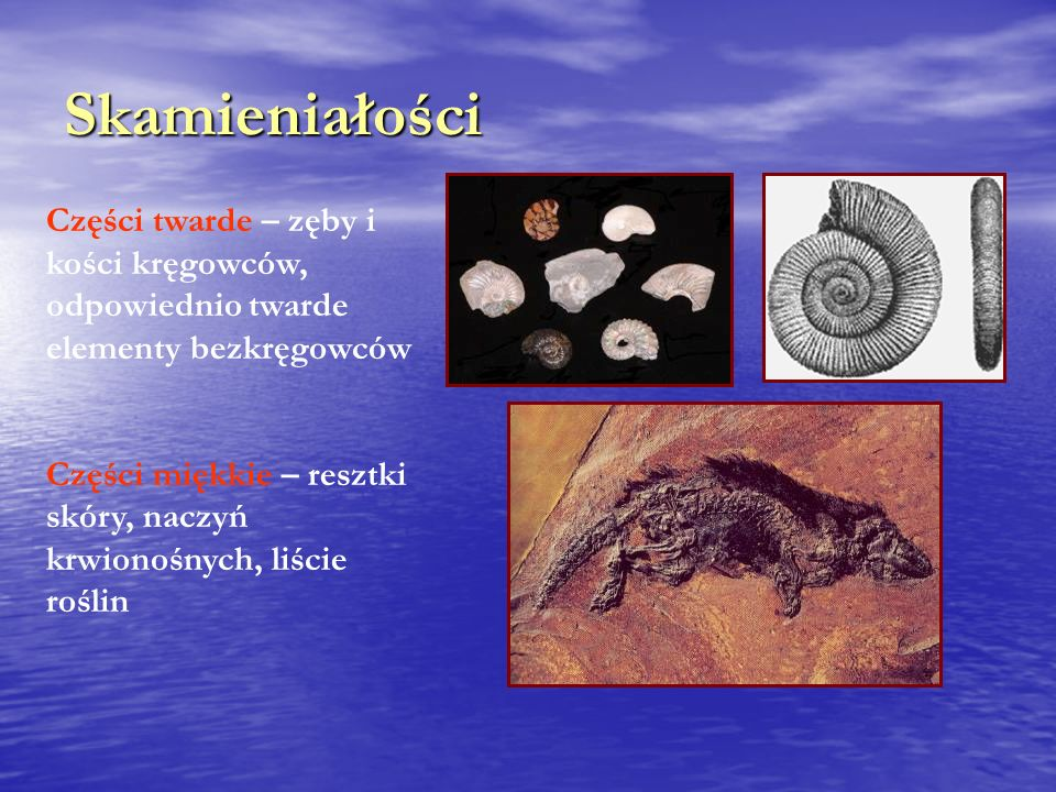 Skamieniałości Części twarde – zęby i kości kręgowców, odpowiednio twarde elementy bezkręgowców.