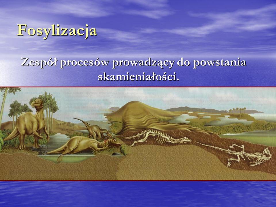 Zespół procesów prowadzący do powstania skamieniałości.
