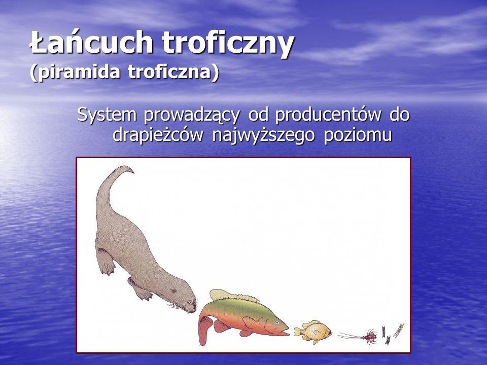 Łańcuch troficzny (piramida troficzna)