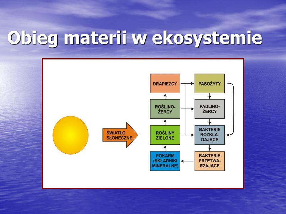 Obieg materii w ekosystemie