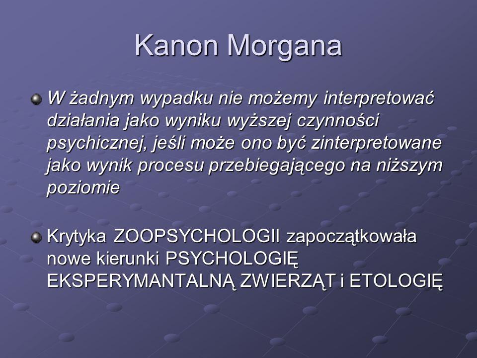 Kanon Morgana
